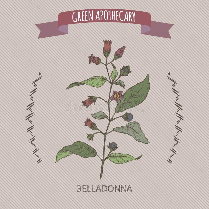 Atropa belladonna aka belladonna or deadly nightshade color sketch. Green apothecary series. royalty free illustration