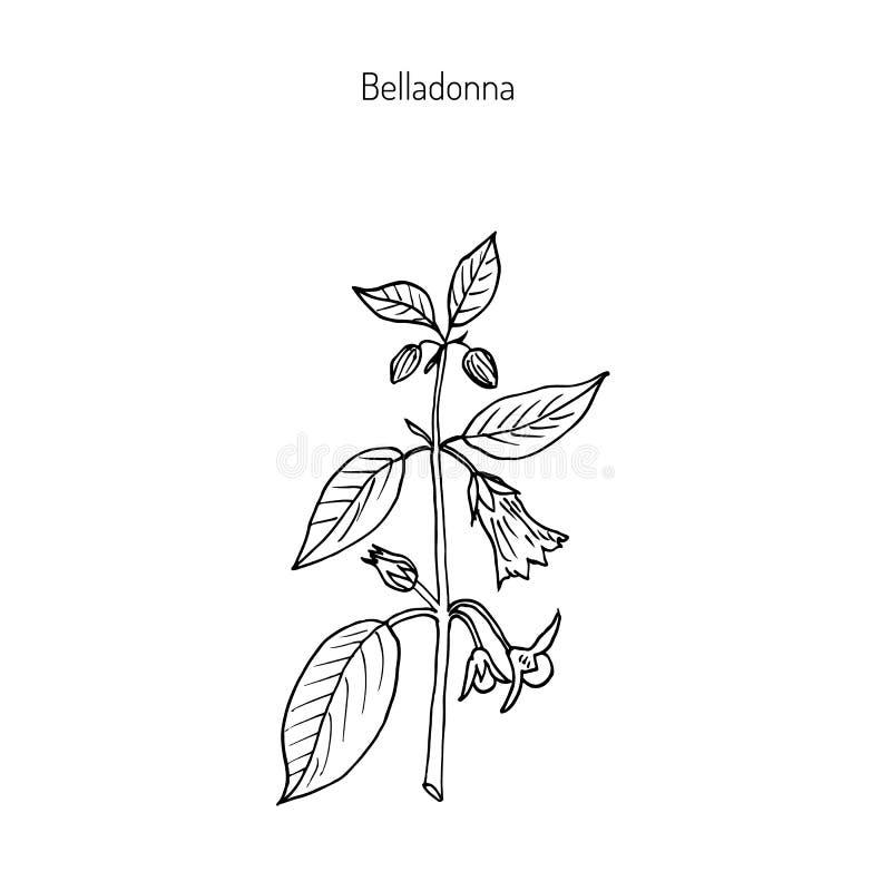 Atropa belladonna, or deadly nightshade royalty free illustration