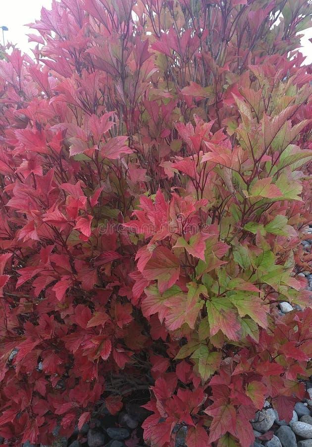 Att ändra av säsongerna faller och hösten royaltyfri fotografi