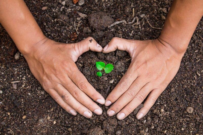 Att bevara naturliga behandlingar för träd göras med två händer royaltyfria bilder