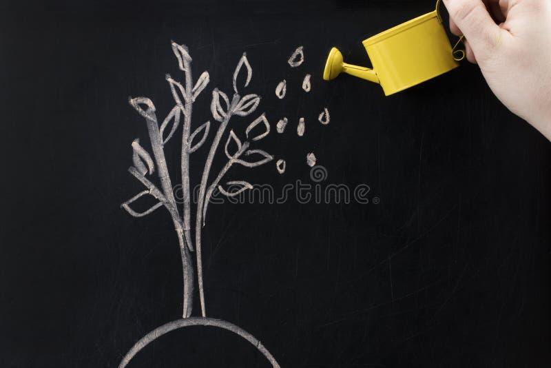 Att bevattna kan och trädet som dras på ett svart tavlabegrepp för affär arkivbild