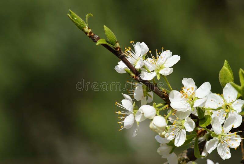 Att blomma fattar royaltyfri bild