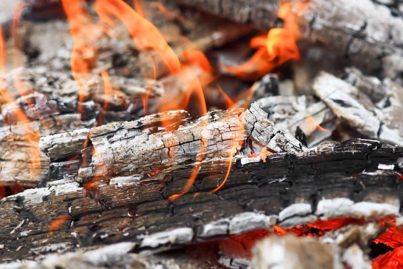 Att bränna bränner till kol med en vit aska och röda flammor arkivbild