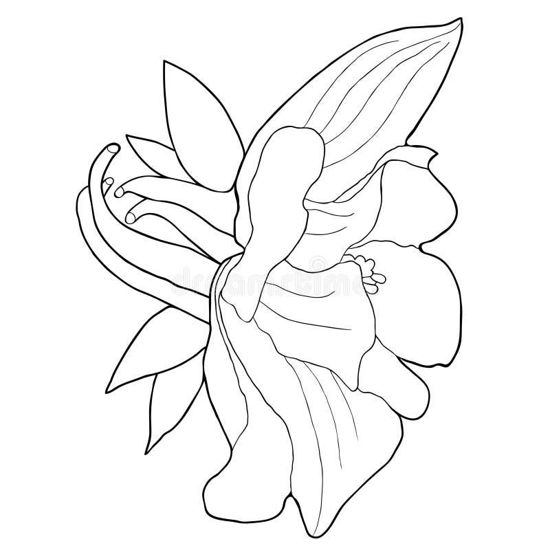 Att färga aquilegiablomman är blommande också vektor för coreldrawillustration royaltyfri illustrationer