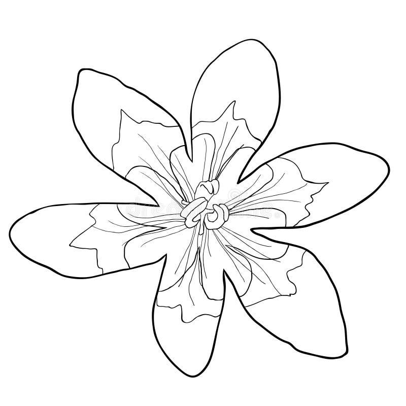 Att färga sparakisna är den exotiska blomman också vektor för coreldrawillustration stock illustrationer