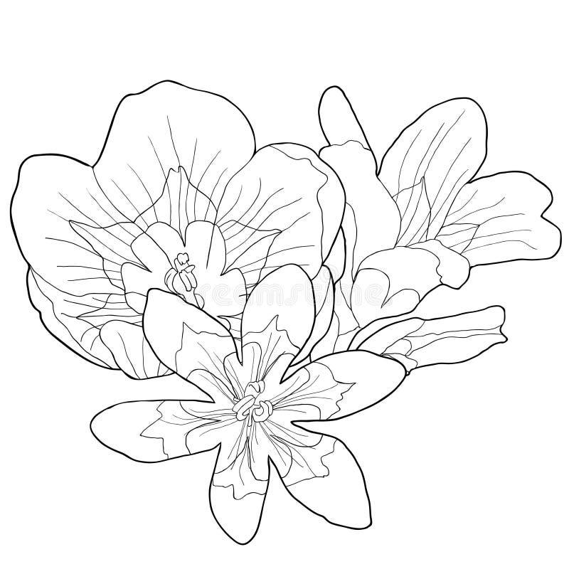 Att färga sparakisna är den exotiska blomman också vektor för coreldrawillustration vektor illustrationer