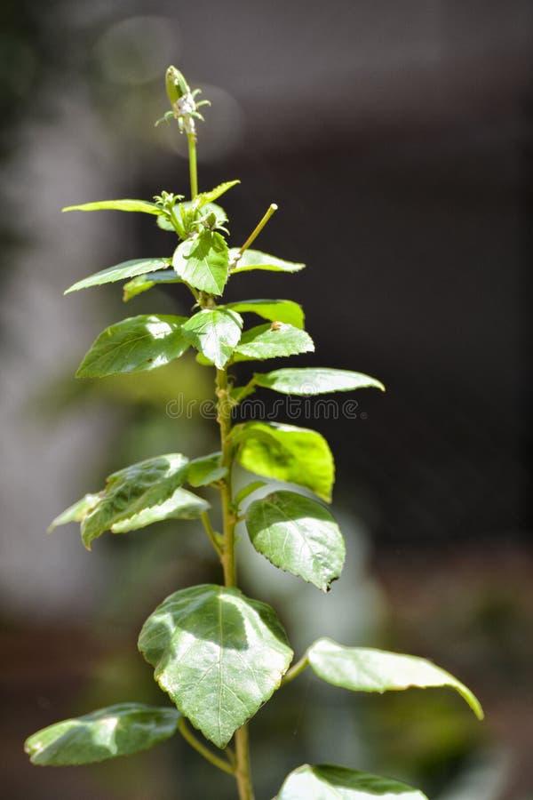 Att få för växt markerade royaltyfri bild