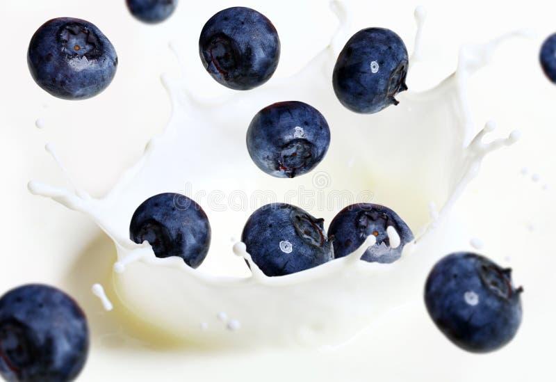 att falla för blåbär mjölkar färgstänk fotografering för bildbyråer