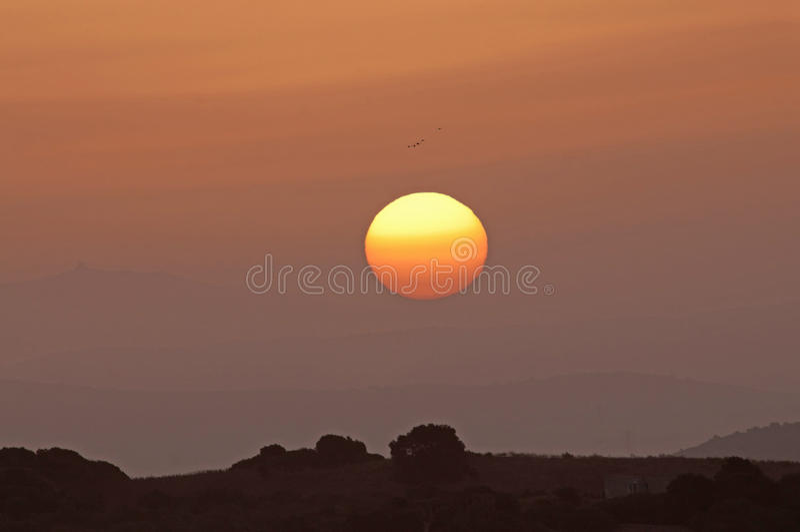 Att flyga för fåglar skidar högt över en kulle på soluppgång royaltyfria foton