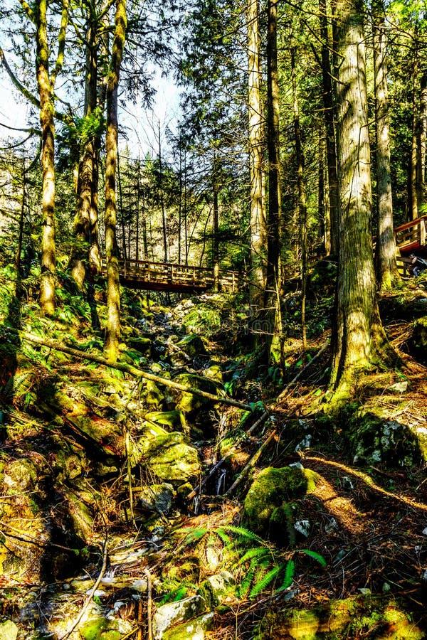 Att fotvandra den tempererade regnskogen i kaskad faller regionalt parkerar mellan städerna av beskickningen och Deroche in F. KR royaltyfria bilder