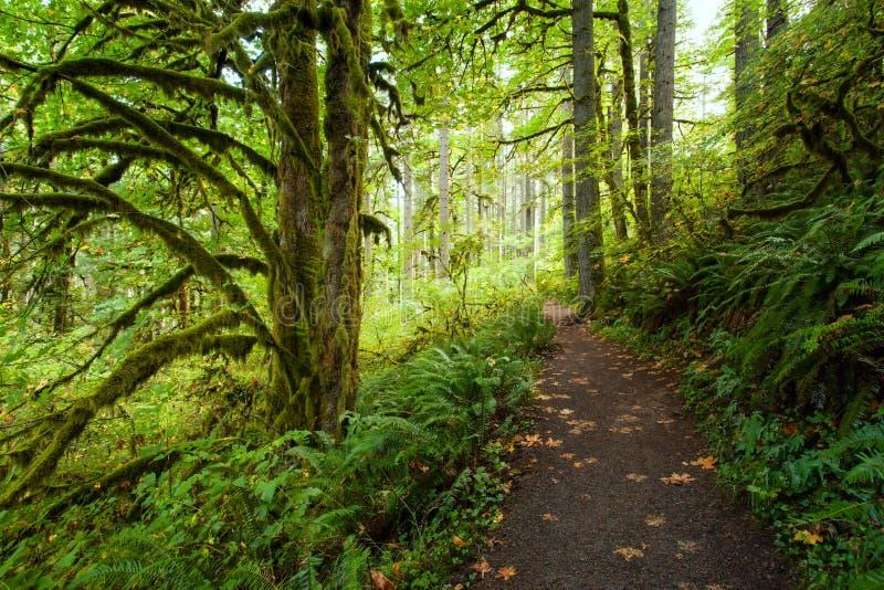 Att fotvandra slingan i silver faller delstatsparken, Oregon i höst arkivfoton