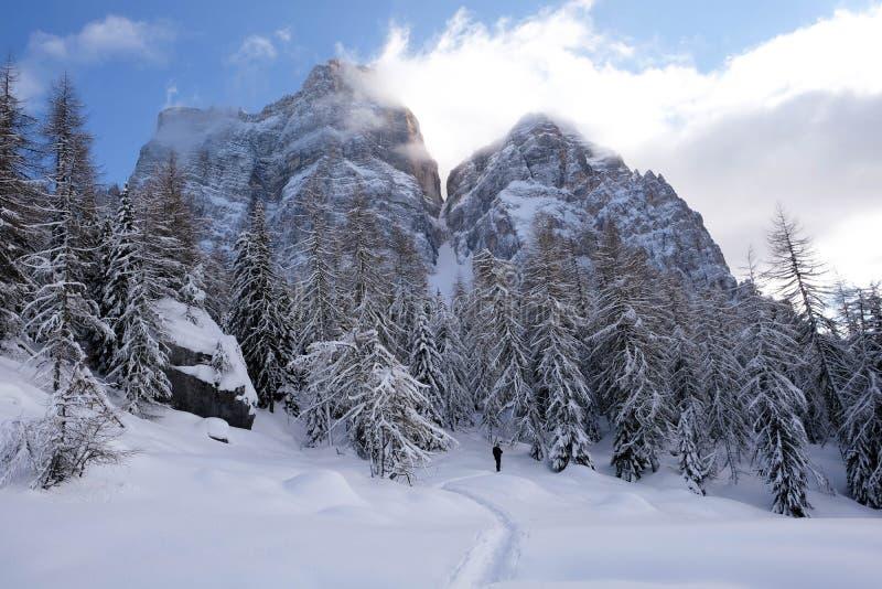 Att gå i bergen i mitt av bergen between sörjer och granar fotografering för bildbyråer