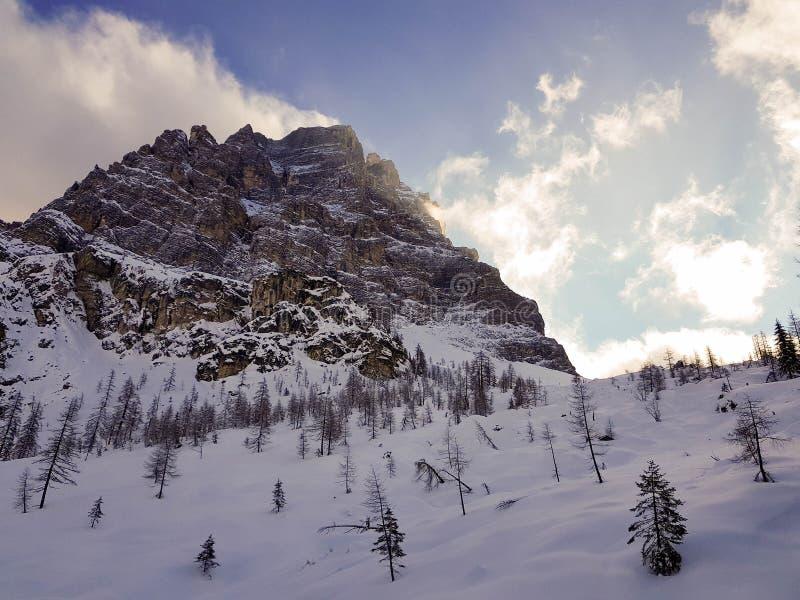 Att gå i bergen i mitt av bergen between sörjer och granar arkivfoton