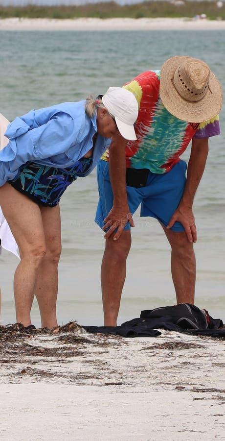 Att gå stranden på St Pete Beach är en stor tidsfördriv royaltyfria foton