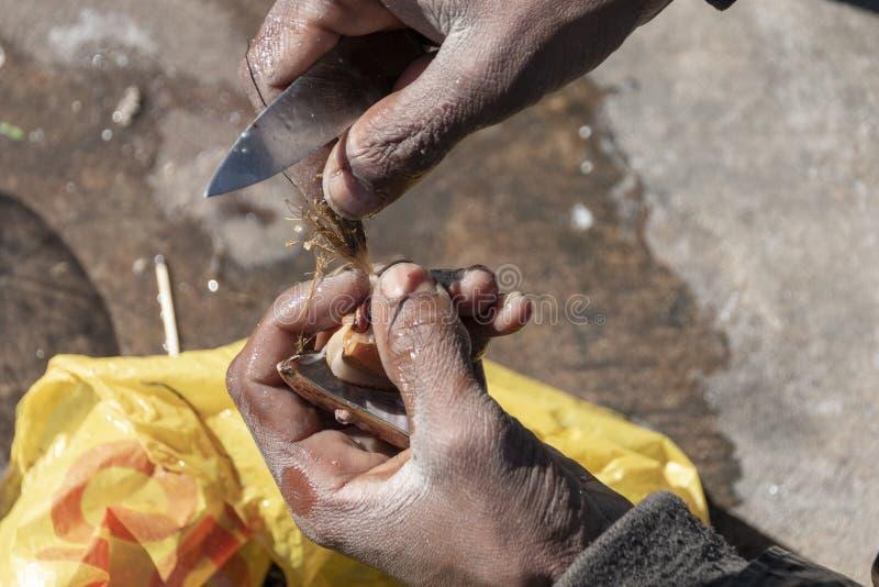 Att klippa för händer öppnar en mussla royaltyfri fotografi