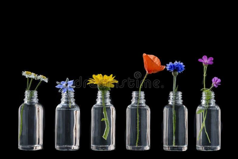 Att läka blommar i flaskor för växt- medicin på svart royaltyfria foton