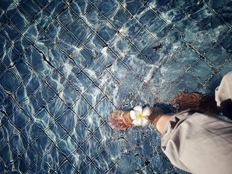 Att läka går i vattnet med att sväva för frangipaniblomma royaltyfri foto