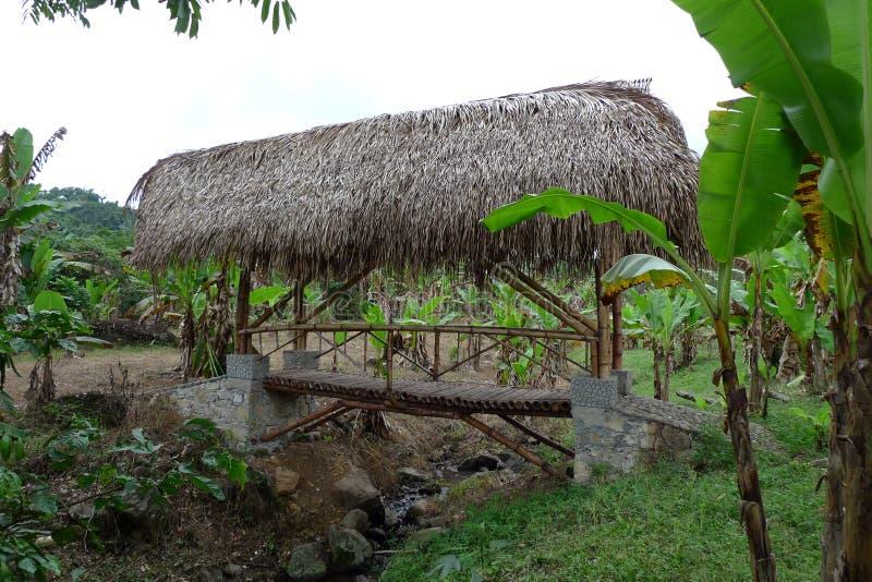 Att laga mat lägger in i bambulagret som tillhör kaffekooperativet arkivfoto