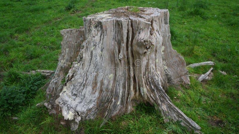 Att ruttna sörjer stubben på lantgård arkivbild