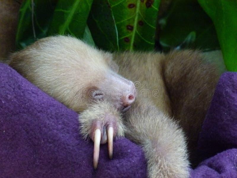 Att sova behandla som ett barn sengångare arkivfoton