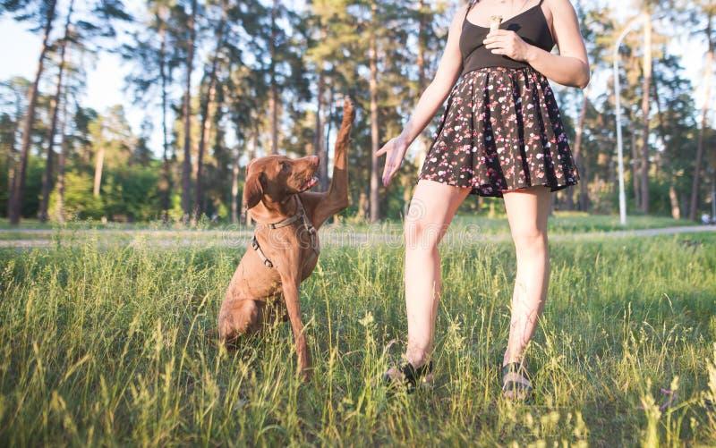 Att spela med hunden på parkerar Det lyckliga ung flickainnehav hänger lös på en vitbakgrund stålarrussell terrier fotografering för bildbyråer