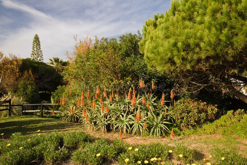Att tycka om i tropiskt exotiskt parkerar med kaktusaloe vera och träd i blå himmel arkivbilder
