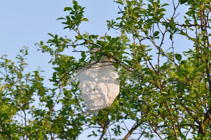 Attaccatura del sacchetto di plastica di un ramo di albero fotografia stock