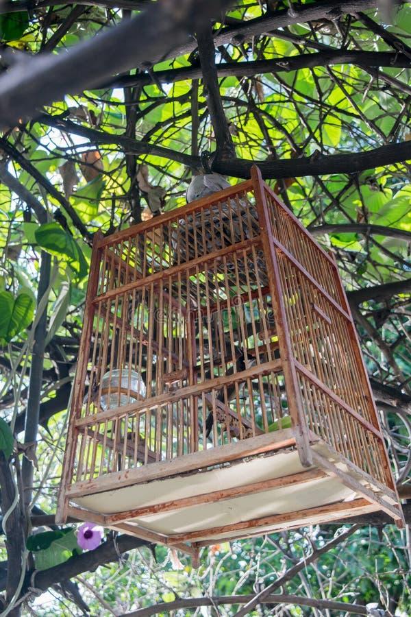 Attaccatura della gabbia per uccelli fotografia stock