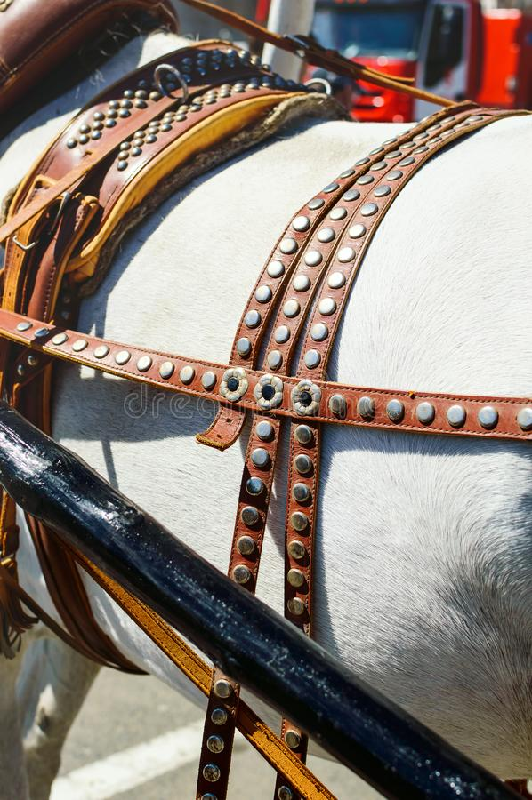 Attachement du chariot au collier de cheval, plan rapproché photographie stock