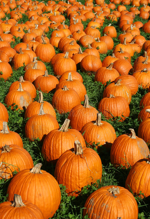 Attack of the Pumpkins royalty free stock image