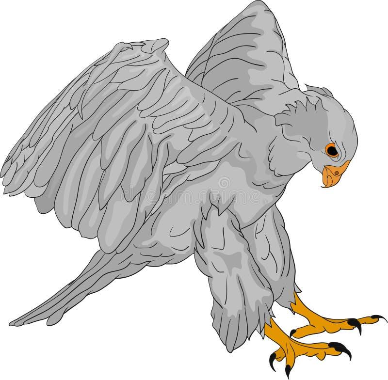 Attacking hawk vector illustration