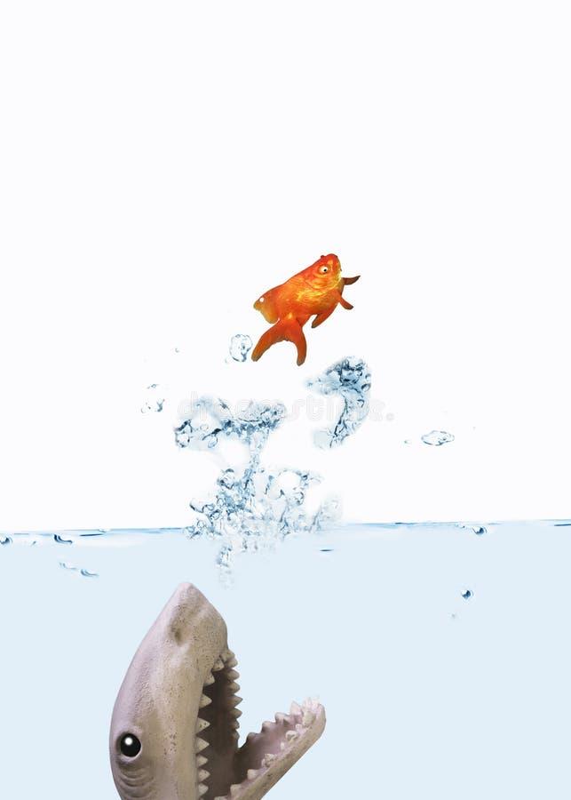 Attaque de requin images stock