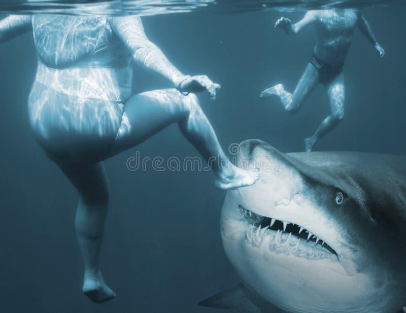 Attaque de requin photo libre de droits