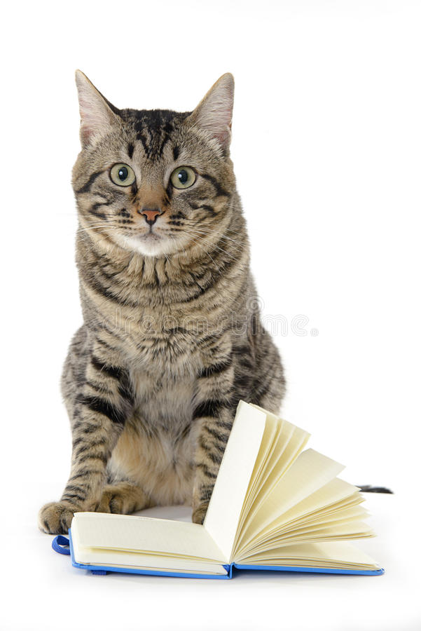 Attent cat with an open notebook stock photos