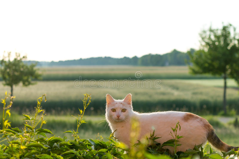 Attentive Cat in the Morning Sun royalty free stock image