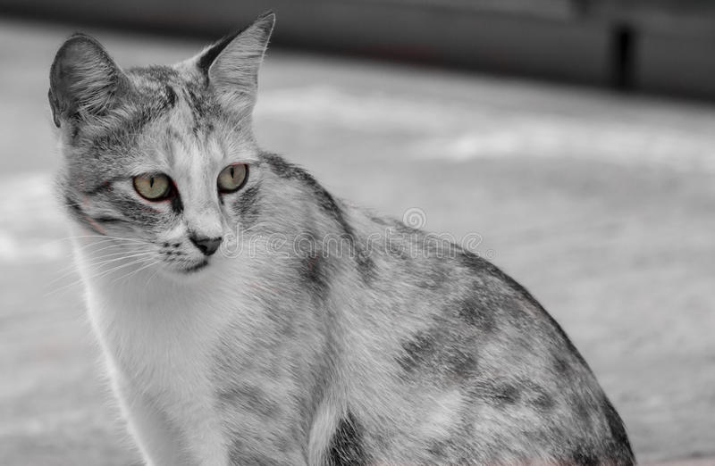 The Attentive Cat royalty free stock photos