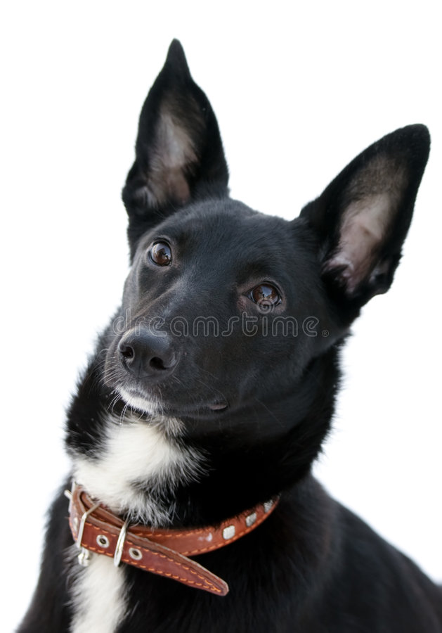 Download Attentive dog stock photo. Image of look, friend, portrait - 8319190
