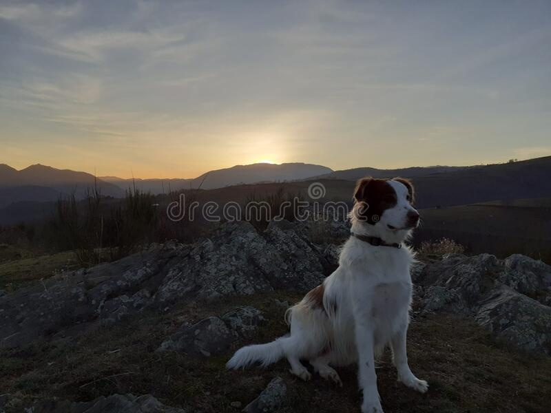 ATTENTIVE DOG. White attentive dog waiting for something royalty free stock images