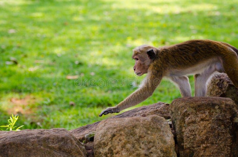 Attentive monkey