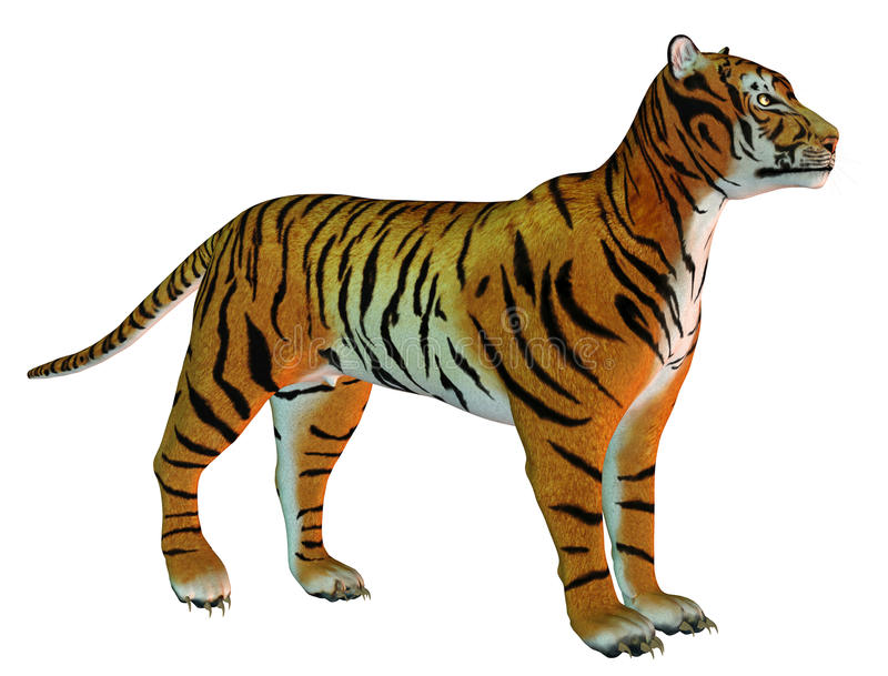 Attentive standing Tigers. 3D Rendering attentive standing Tigers stock illustration