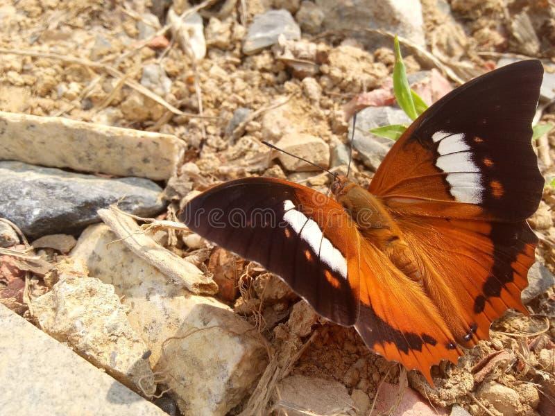 Atterraggio della farfalla del fiore sulla terra fotografie stock libere da diritti