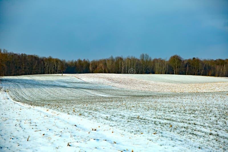 Atterri in un settore coltivato coperto di neve bianca dell'inverno con nessuna parte lasciata con le zolle nude del pretendin de immagine stock