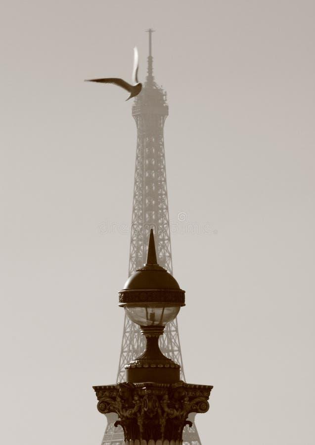Atterrissage d'oiseau à Paris photographie stock libre de droits