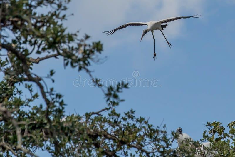 Atterrissage de cigogne en bois image libre de droits