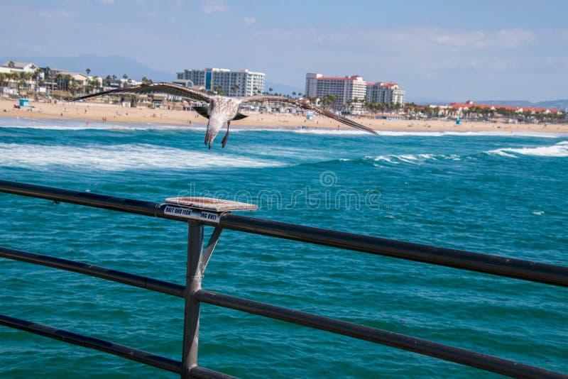 Atterrissage de mouette sur l'étagère de coupe d'amorce sur la balustrade du pilier avec l'océan et de la plage à l'arrière-plan photographie stock