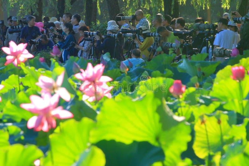 Attesa del lato dello stagno di loto degli entusiasti di fotografia di Sun sugli uccelli e sui fiori immagini stock