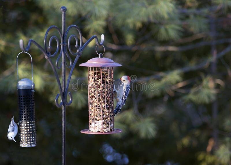 Attirando gli uccelli verso gli alimentatori del cortile fotografia stock