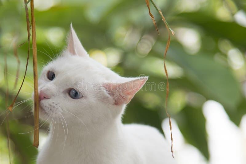 Attirez les animaux de merveille du ` s de nature photo libre de droits