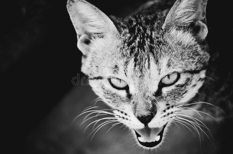Attitude angry me stay away from me anger royalty free stock photography