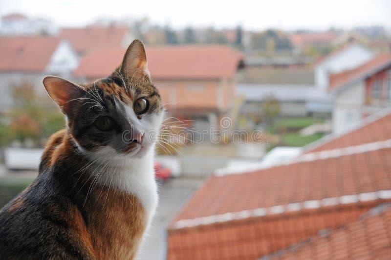Attitude de chat images libres de droits